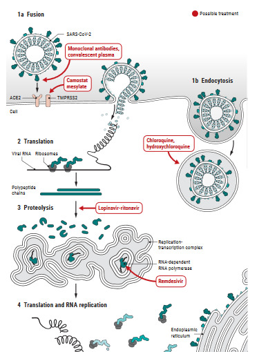 Covid-19 Patent Analysis - Figure 3 Schematic representation of Coronavirus replication cycle and the target site of each repurposed drug